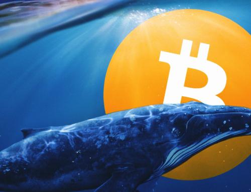 Il numero di balene Bitcoin è ai minimi storici, ecco le probabili cause