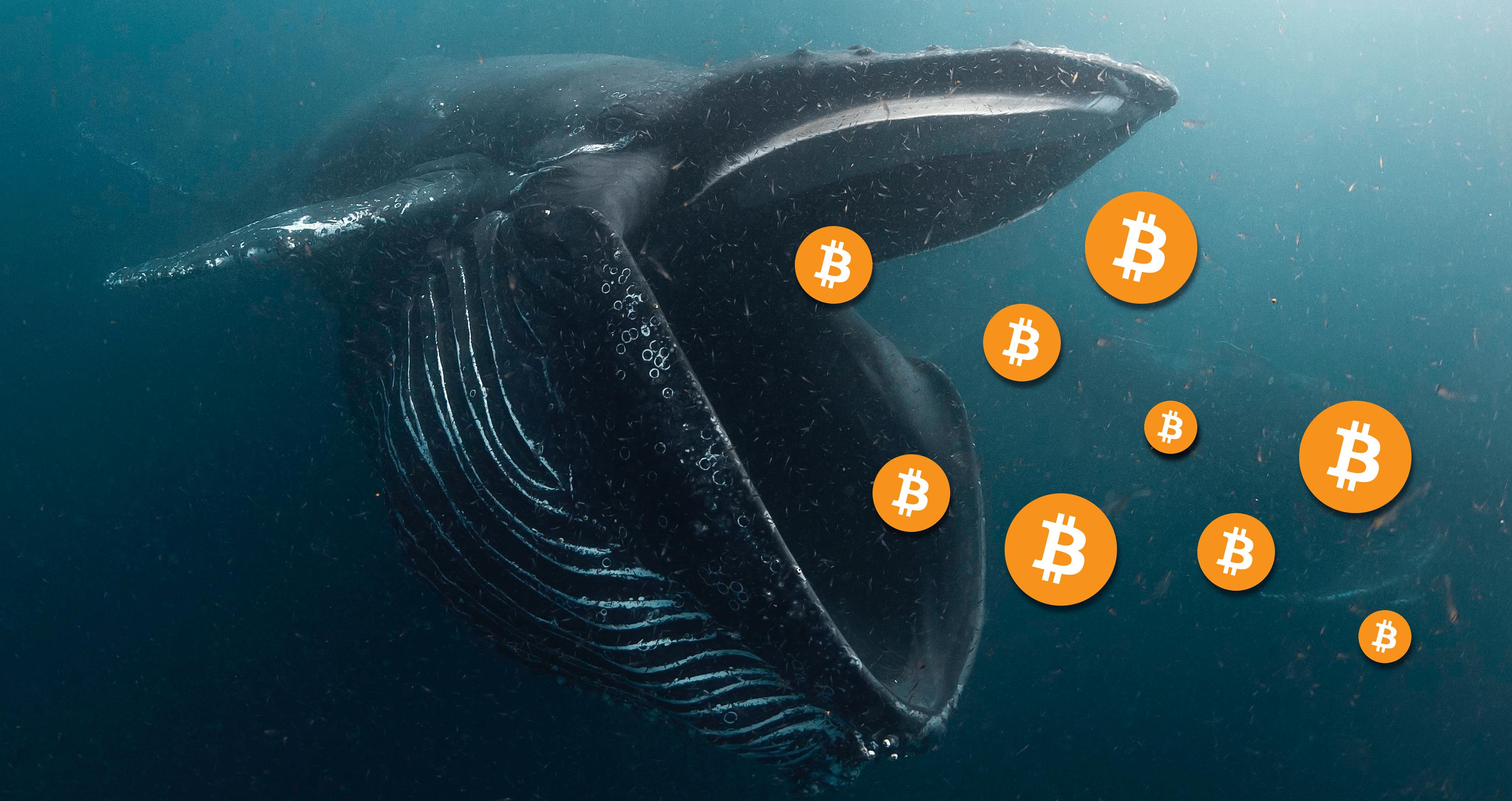 Le balene di Bitcoin acquistano 60K BTC in un giorno